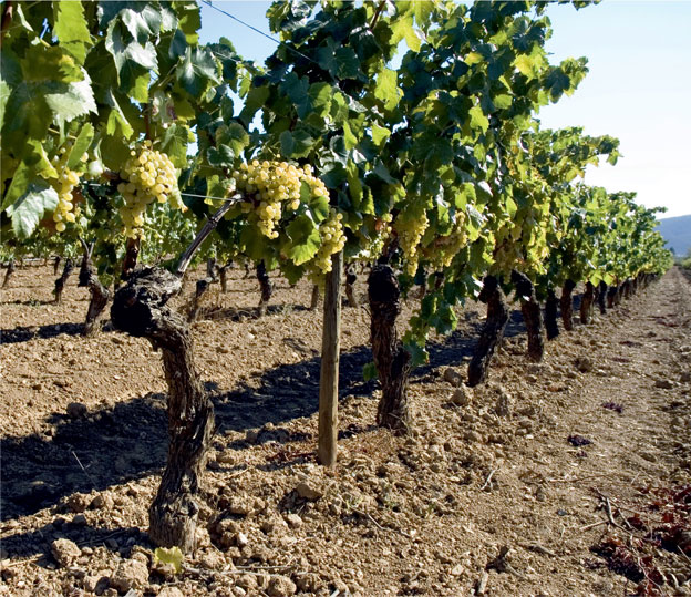 Terroir and Grapes
